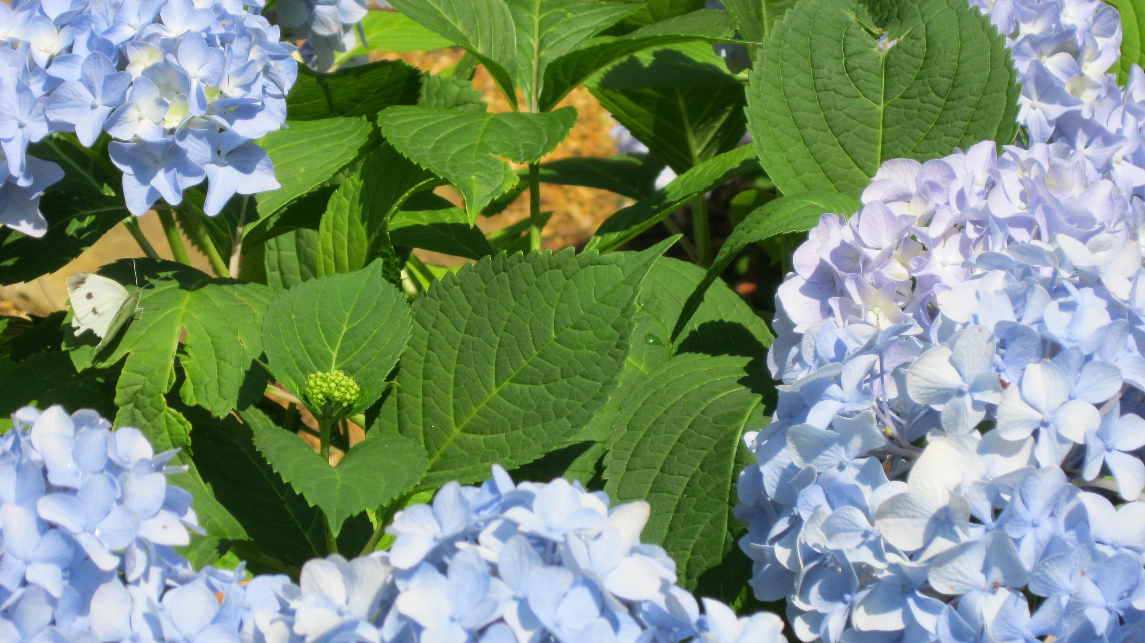 Transformation Garden…